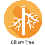 Private Biliary Ultrasound Scan