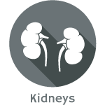 Kidney Renal Ultrasound Scan