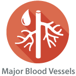 Major_blood_vessels_icon.png